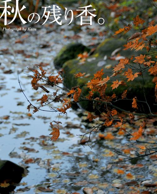 kazu452_20101219081855.jpg