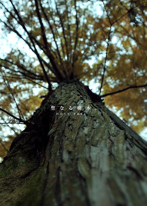 n_139.jpg