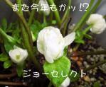 2010923joh.jpg