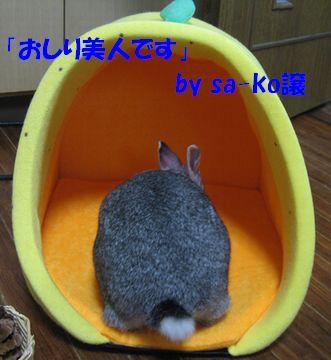 sa-ko 20111209 001
