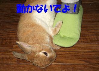 pig 20111215 001