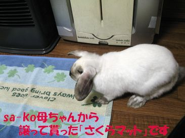 sakura 20111219 001