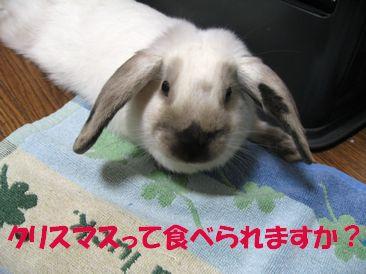 sakura 20111221 001