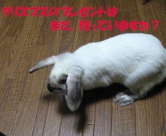 sakura 20111225 001