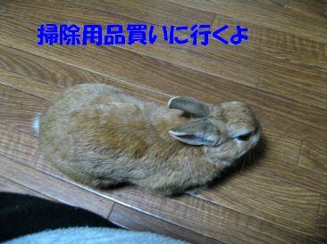 pig 20111229 001
