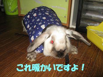 sakura 20111229 001