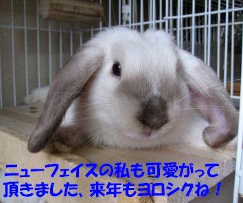 sakura 20111230 001