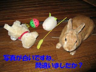 pig 20120109 001