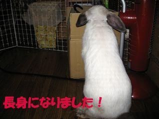 sakura 20121011 001