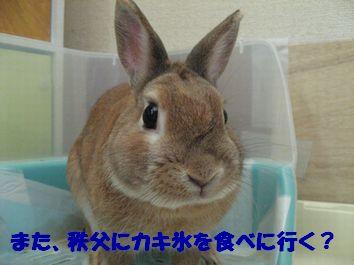 pig 20120119 001