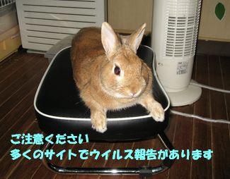 pig 20120124 001