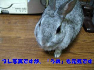 ume 20120125 001