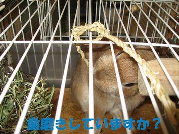 pig 20120131 001