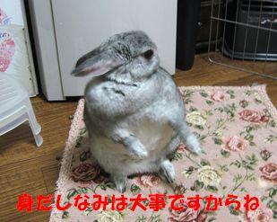sa-ko 20120201 001