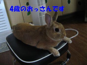 pig 20120222 001