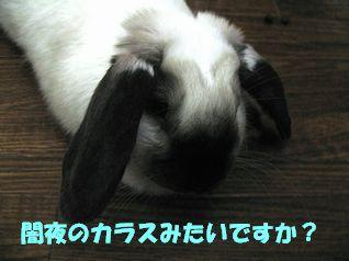 sakura 20120305 001