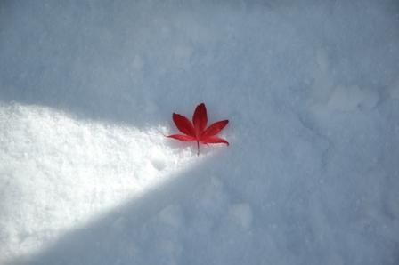 1103初雪10