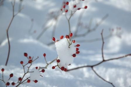 1103初雪1