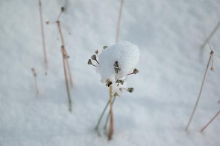 1103初雪2