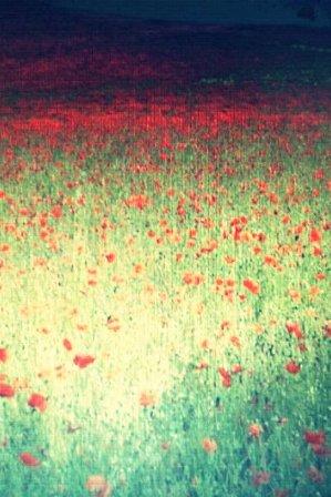 110808 flower.