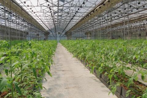 110908 山農園。