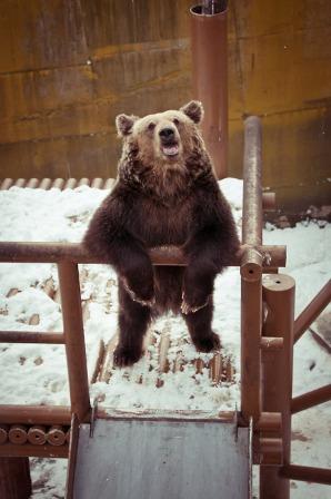 120218 bear