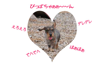 DSC_6583.jpg