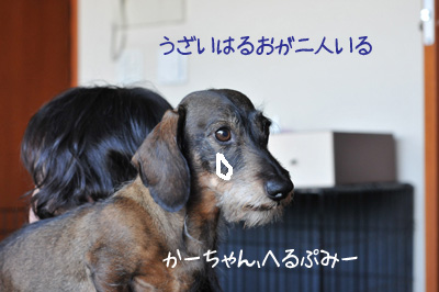 DSC_7196.jpg