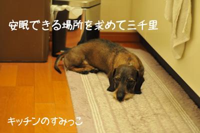 DSC_7308.jpg