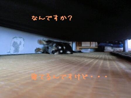 fc2blog_201205102145346db.jpg