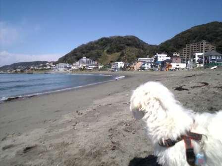 秋谷海岸1