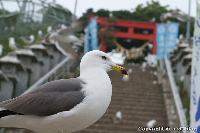 kabushima1006a_eip.jpg