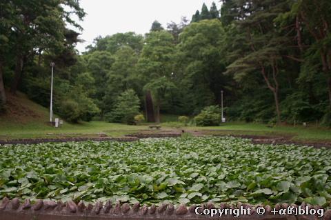 misawapark10b_eip.jpg