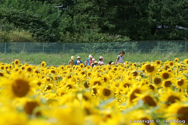 momoishi1009c_eip.jpg