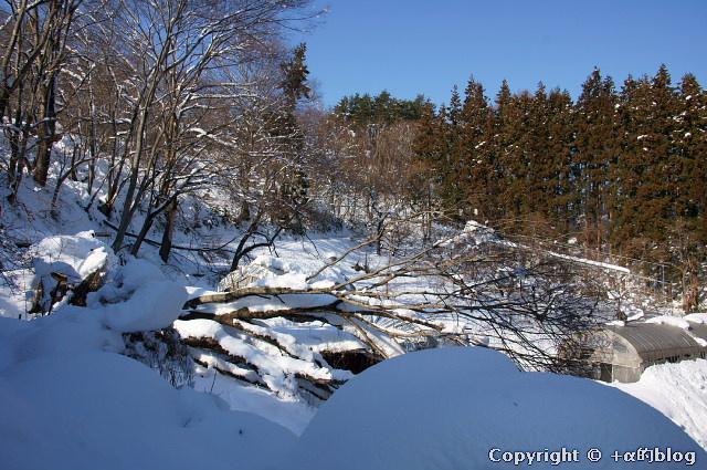 snow1101-17_eip.jpg