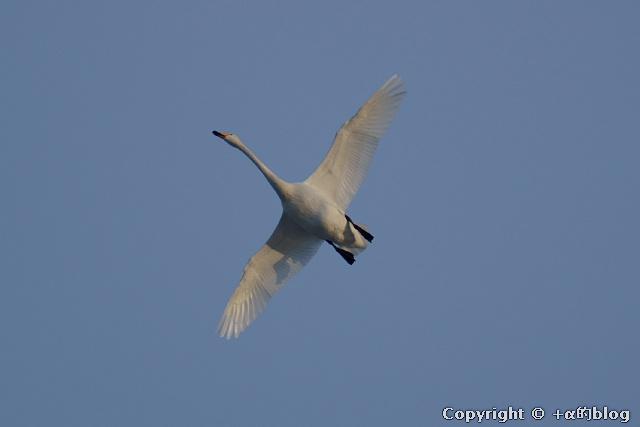 swan1101aa_eip.jpg