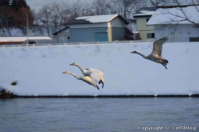 swan1101h_eip.jpg