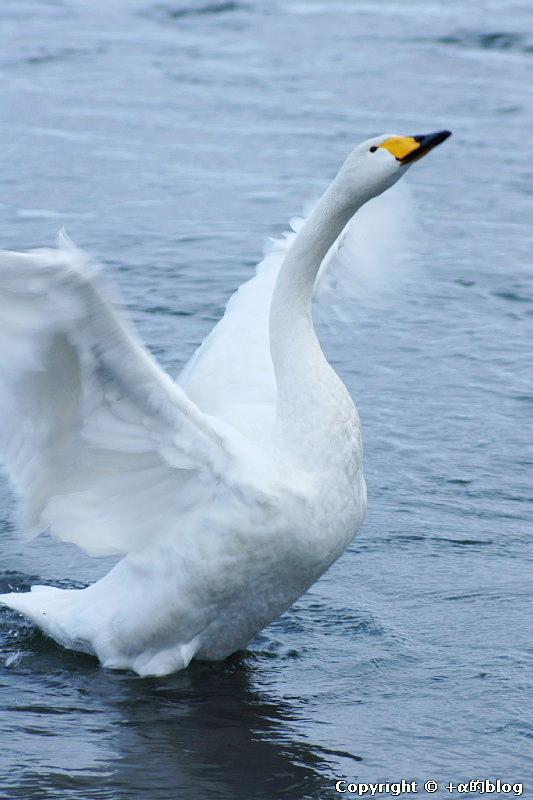 swan1101kk_eip.jpg