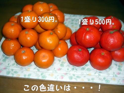 pocky912 0014