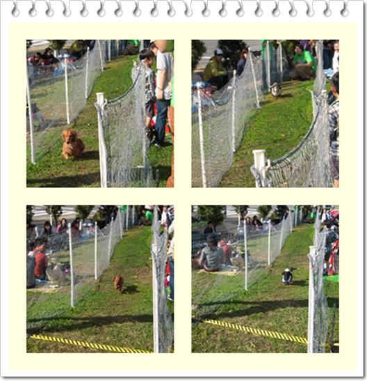 kakekko_20111123220541.jpg