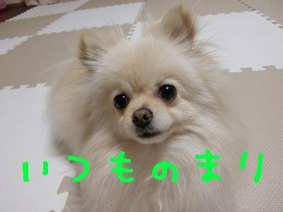 CIMG4089.jpg