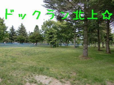CIMG4155.jpg
