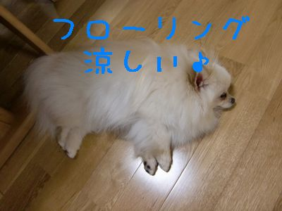 CIMG4236.jpg
