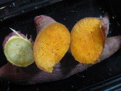 ハマコマチはオレンジ色