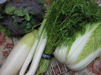 一応鎌倉野菜