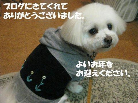 IMG_5253wan.jpg