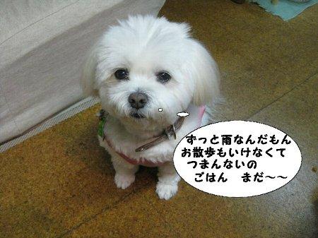 IMG_9441gohan.jpg