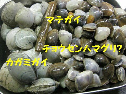 kai_20100824012659.jpg