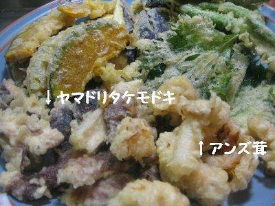 tennpura_20100706000818.jpg