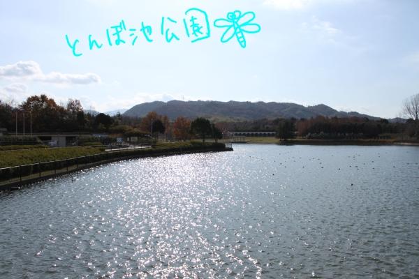 ponzu94 409_edited-1